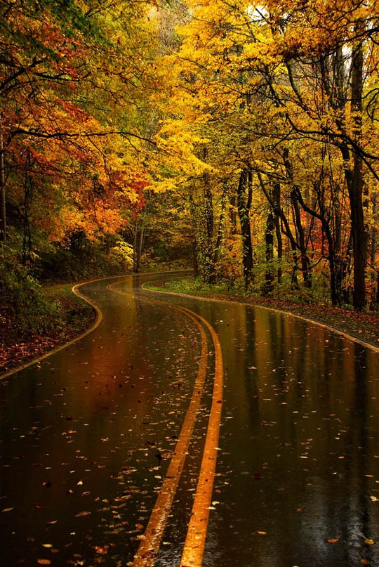 country road fall wet rainy yellow orange leaves