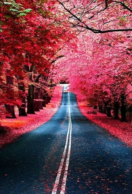 hot pink street trees leaves