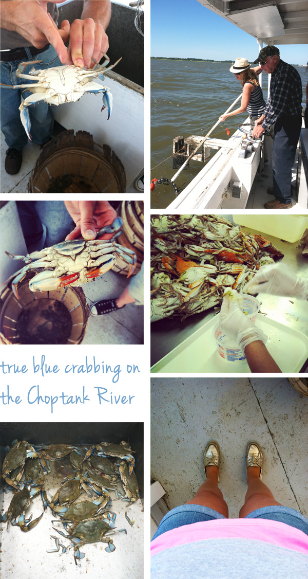 crabbing Marland Chesapeake seafood crabs Choptank River True Blue