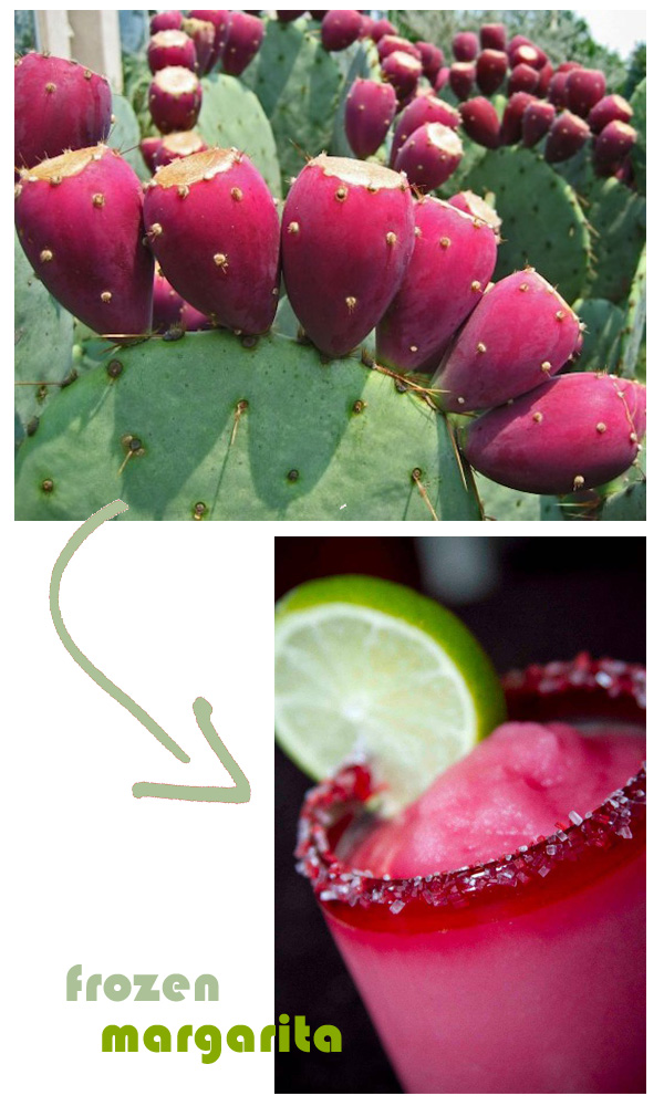 prickly pear margarita bandolero