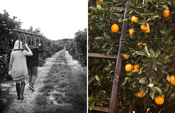Orange Grove Engagement Session from Green Wedding Shoes
