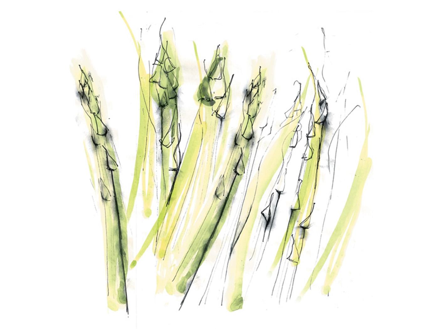 Christina Drejenstam asparagus