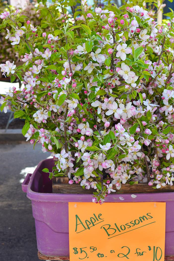 Cupcakes for Breakfast: Farmer's Market Mornings – Apple Blossoms